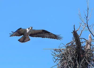 Photograph - Osprey Approaching Nest DRB0281 by Gerry Gantt