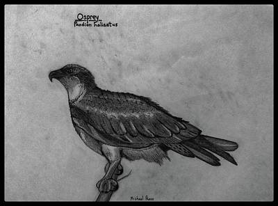 Animals Drawings - Osprey ID In Pencil W/ Border by Michael Panno