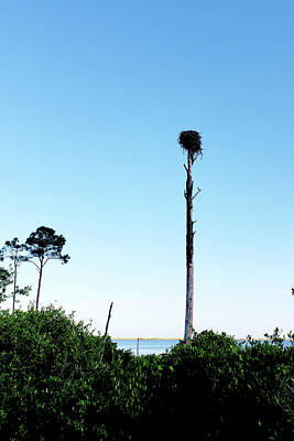Photograph - Osprey Nest  by Debbie Smith