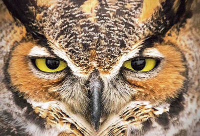 Ira Marcus Royalty-Free and Rights-Managed Images - Owl Eyes by Ira Marcus