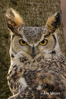 Photograph - Owl Eyes by Joan Wallner