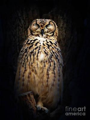 Digital Art - Owl Nap by Babette Van den Berg
