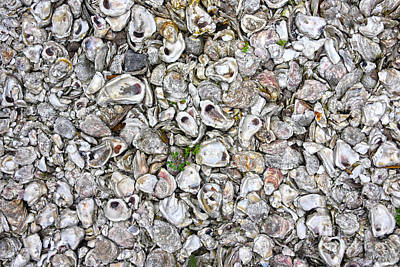 Book Quotes - Oyster Shells by Catherine Sherman