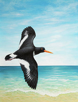 Painting - Oystercatcher by Craig Austin