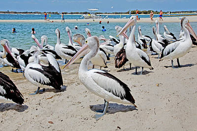Royalty-Free and Rights-Managed Images - Packed Beach by Az Jackson