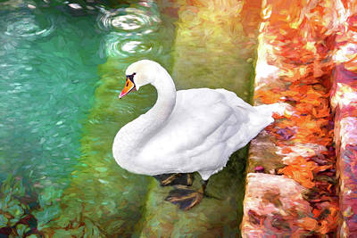 Royalty-Free and Rights-Managed Images - Paddling Swan  by Carol Japp