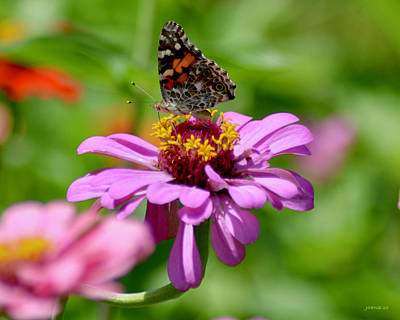 Royalty-Free and Rights-Managed Images - Painted Lady by Greg Joens