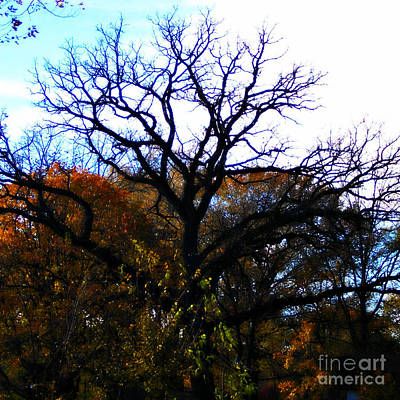 Frank J Casella Royalty-Free and Rights-Managed Images - Painterly Fall Leaves and Tree Silhouette  by Frank J Casella