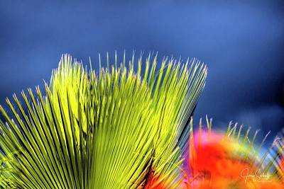 Jerry Sodorff Royalty-Free and Rights-Managed Images - Palm and Flower by Jerry Sodorff