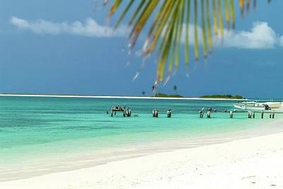 Photograph - Palm Beach Los Roques Venezuela  by Organizacion Bluewater