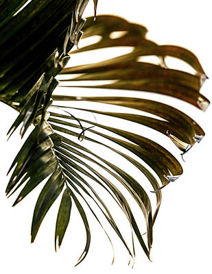Photograph - Palm by Christopher Johnson