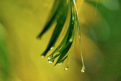 Royalty-Free and Rights-Managed Images - Palm Frond In The Rain by Christopher Johnson