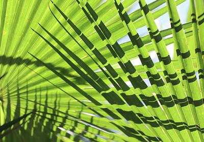 American Milestones - Palm Leaves Pattern by David T Wilkinson
