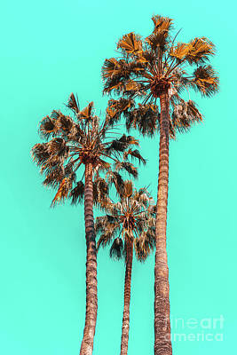 Royalty-Free and Rights-Managed Images - Palm Spring Trees, Breezy Palm, California Laguna Beach, Sunny California Palm Tree Leaves by Radu Bercan