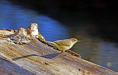 Sean Rights Managed Images - Palm Warbler With Breakfast Royalty-Free Image by Debbie Oppermann