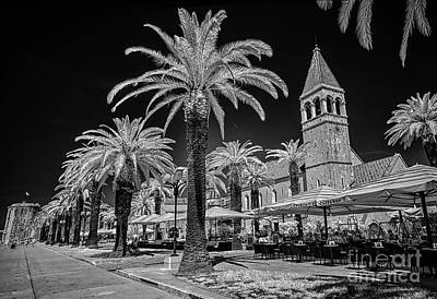 Stellar Interstellar Royalty Free Images - Palms along Trogir Promenade Royalty-Free Image by Norman Gabitzsch