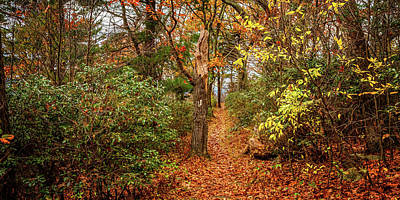 Photograph - 2to1 Pano - Appalachian Trail in Shenandoah National Park by Gestalt Imagery