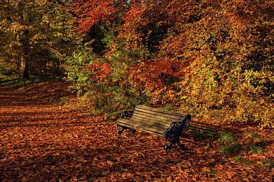 Photograph - Park bench in Autumn by Paul Madden