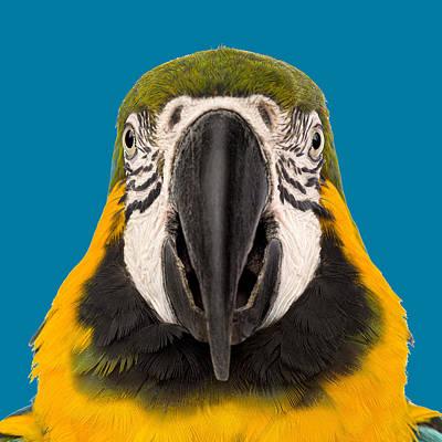 Digital Art - Parrot Face by Dale Jackson