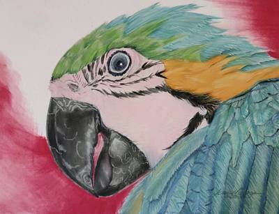 Animals Drawings - Parrot by Joan Mansson