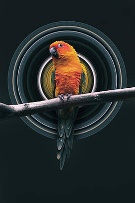 Birds Rights Managed Images - Parrot Pixel Stretch Royalty-Free Image by Pelo Blanco Photo