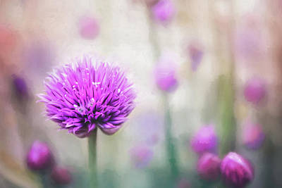 Royalty-Free and Rights-Managed Images - Pastel Flowering Chives  by Carol Japp