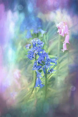 Abstract Graphics Rights Managed Images - Pastel Woodland Bluebells  Royalty-Free Image by Carol Japp