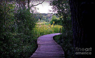 Rights Managed Images - Path to Yellow Flowers Royalty-Free Image by Frank J Casella