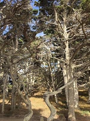 Royalty-Free and Rights-Managed Images - Pathway through the trees Point Lobos by Luisa Millicent