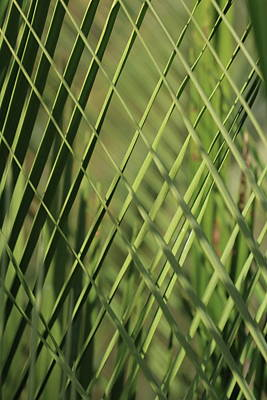 Staff Picks Judy Bernier Rights Managed Images - Patterns of Macrozamia Royalty-Free Image by Michaela Perryman