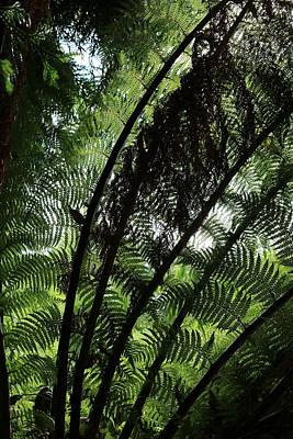 Man Cave - Patterns of the Fronds by Michaela Perryman