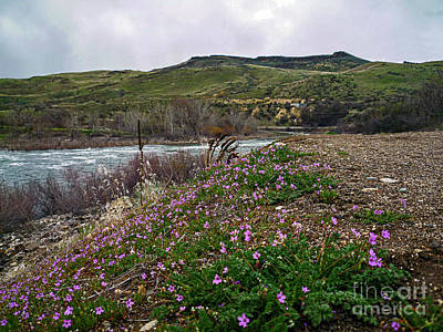 School Tote Bags Royalty Free Images - Payette River IDA_077 Royalty-Free Image by Howard Stapleton