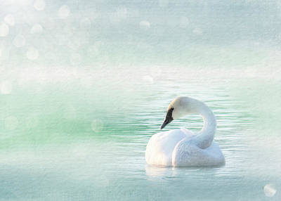 Reptiles - Peaceful Pastel Teal Morning Swan by Patti Deters