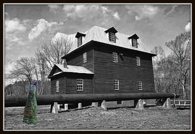 Animals Digital Art - Peacock At The Mill In Selective Color by Constance Lowery