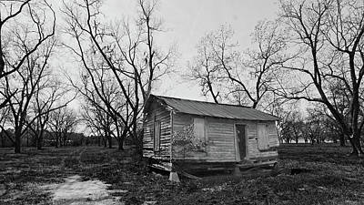 Photograph - Pecan grove in winter by Ronald Broome