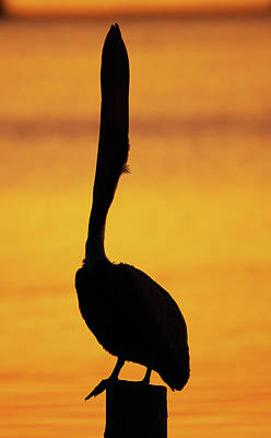 Lori A Cash Royalty-Free and Rights-Managed Images - Pelican Bill Throw by Lori A Cash