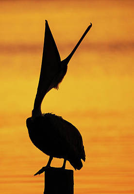 Lori A Cash Royalty-Free and Rights-Managed Images - Pelican Head Throw by Lori A Cash