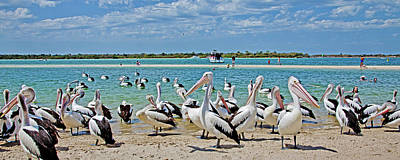 Royalty-Free and Rights-Managed Images - Pelican Party by Az Jackson