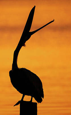Lori A Cash Royalty-Free and Rights-Managed Images - Pelican Silhouette Head Throw by Lori A Cash