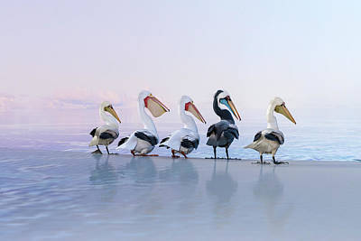 Surrealism Digital Art - Pelicans Perfect Coastal Morning by Betsy Knapp