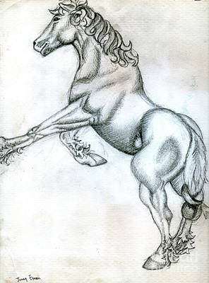 Animals Drawings - Percheron Horse Sketch by Genevieve Esson