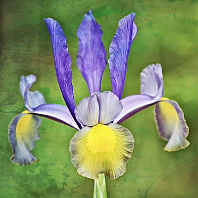 Abstract Airplane Art - Perfect Dutch Iris Squared by Gaby Ethington