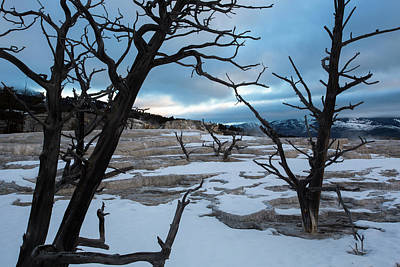 Photograph - Petrified trees of Yellowstone by Emmanuel Rondeau