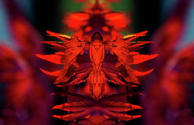 Pop Art Rights Managed Images - Phyllium Guardian 2 Royalty-Free Image by Pelo Blanco Photo
