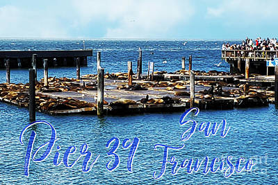 Animals Royalty-Free and Rights-Managed Images - Pier 39 Postcard by Diann Fisher