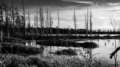 Photograph - Pine Barrens Landscape by Louis Dallara