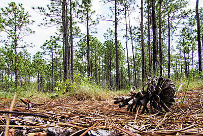 Kitchen Spices And Herbs - Pine Cone on the Forest Floor by Bob Decker