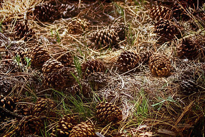 Photograph - Pine Cones In Staunton State Park by Mike Braun