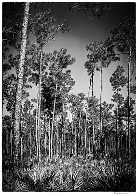 Paul Mccartney - Pine Landscape 30BW by Rudy Umans