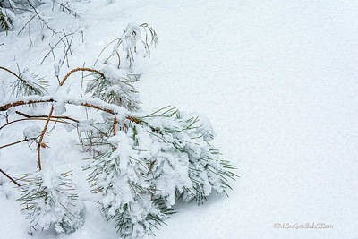 Photograph - Pine Walk into Winter by LeeAnn McLaneGoetz McLaneGoetzStudioLLCcom